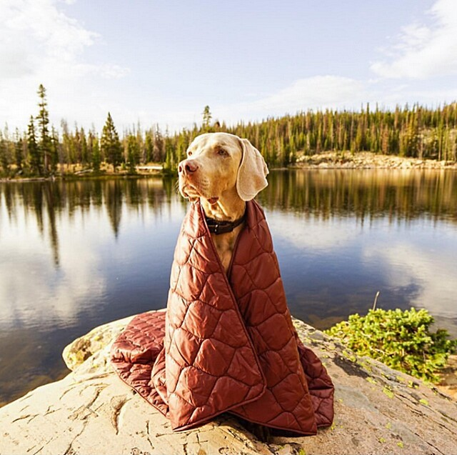 foto-cani-campeggio-trekking-hicking-natura-instagram-camping-with-dogs-17-keb