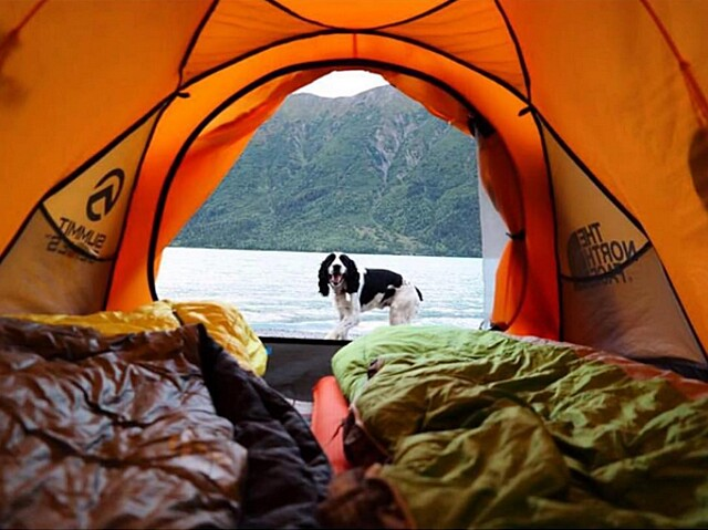 foto-cani-campeggio-trekking-hicking-natura-instagram-camping-with-dogs-18-keb