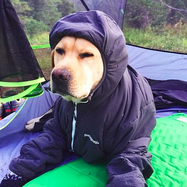 foto-cani-campeggio-trekking-hicking-natura-instagram-camping-with-dogs-19-keb