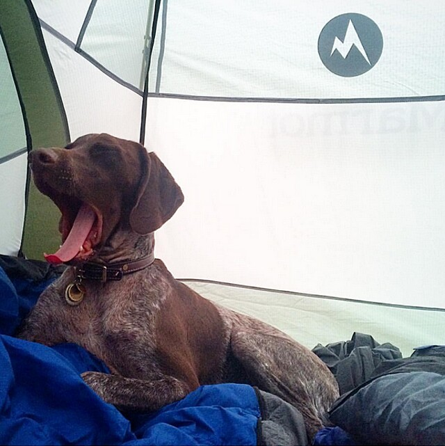 foto-cani-campeggio-trekking-hicking-natura-instagram-camping-with-dogs-20-keb