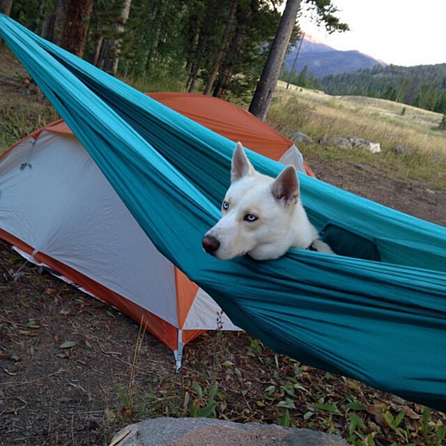foto-cani-campeggio-trekking-hicking-natura-instagram-camping-with-dogs-21-keb