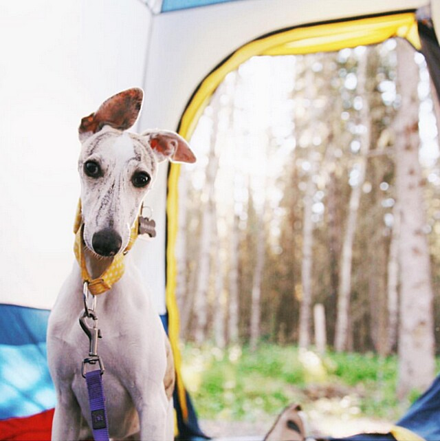 foto-cani-campeggio-trekking-hicking-natura-instagram-camping-with-dogs-23-keb