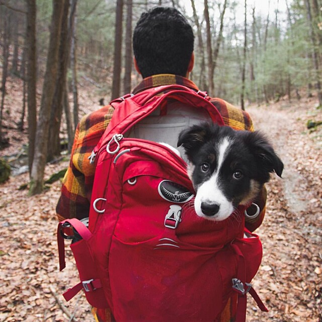 foto-cani-campeggio-trekking-hicking-natura-instagram-camping-with-dogs-25-keb