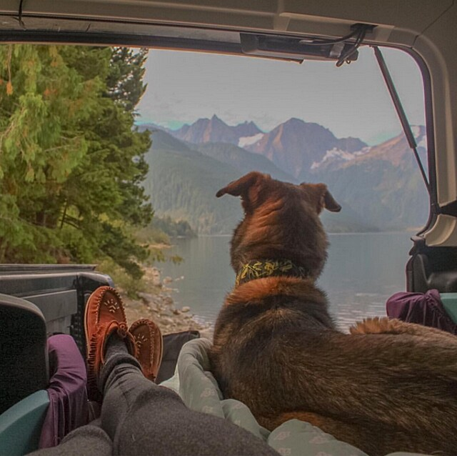 foto-cani-campeggio-trekking-hicking-natura-instagram-camping-with-dogs-28-keb