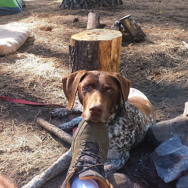 foto-cani-campeggio-trekking-hicking-natura-instagram-camping-with-dogs-34-keb
