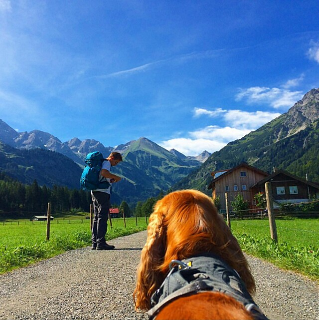 foto-cani-campeggio-trekking-hicking-natura-instagram-camping-with-dogs-35-keb