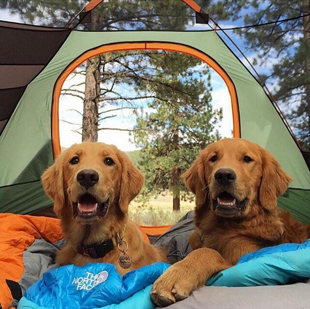 foto-cani-campeggio-trekking-hicking-natura-instagram-camping-with-dogs-39-keb