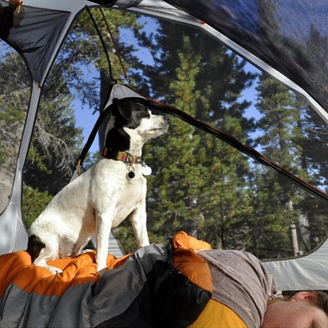 foto-cani-campeggio-trekking-hicking-natura-instagram-camping-with-dogs-41-keb
