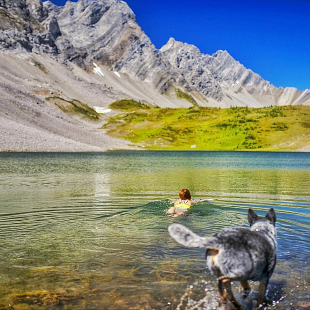 foto-cani-campeggio-trekking-hicking-natura-instagram-camping-with-dogs-43-keb