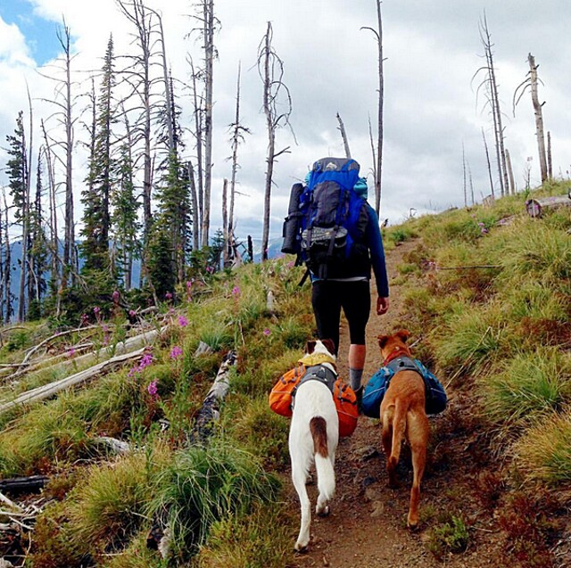 foto-cani-campeggio-trekking-hicking-natura-instagram-camping-with-dogs-44-keb