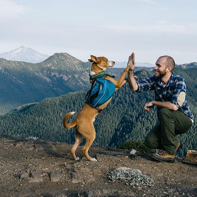 foto-cani-campeggio-trekking-hicking-natura-instagram-camping-with-dogs-45-keb