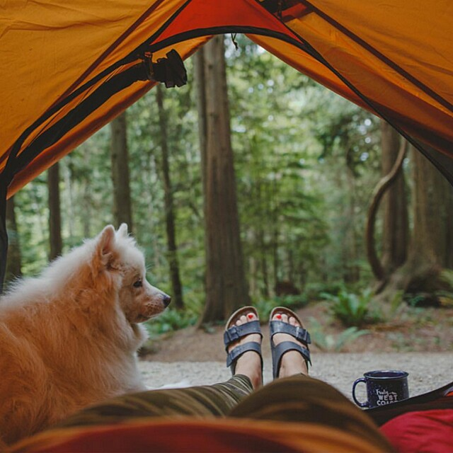 foto-cani-campeggio-trekking-hicking-natura-instagram-camping-with-dogs-46-keb