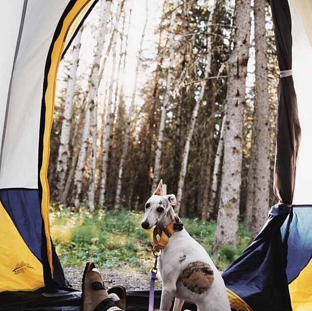 foto-cani-campeggio-trekking-hicking-natura-instagram-camping-with-dogs-47-keb