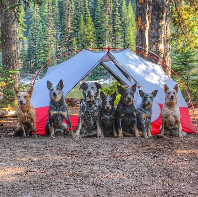 foto-cani-campeggio-trekking-hicking-natura-instagram-camping-with-dogs-48-keb