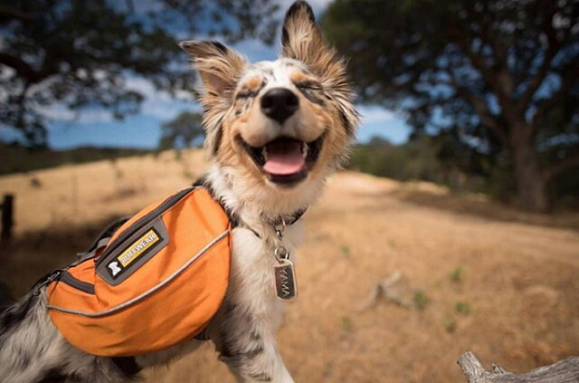 foto-cani-campeggio-trekking-hicking-natura-instagram-camping-with-dogs-49-keb