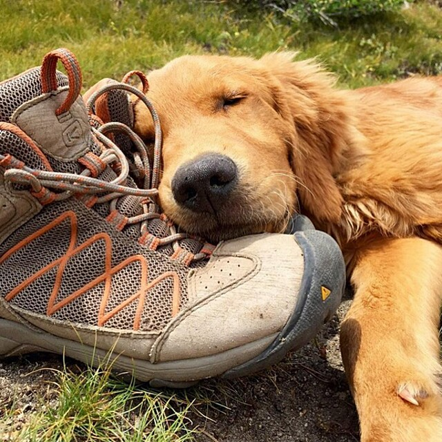 foto-cani-campeggio-trekking-hicking-natura-instagram-camping-with-dogs-50-keb