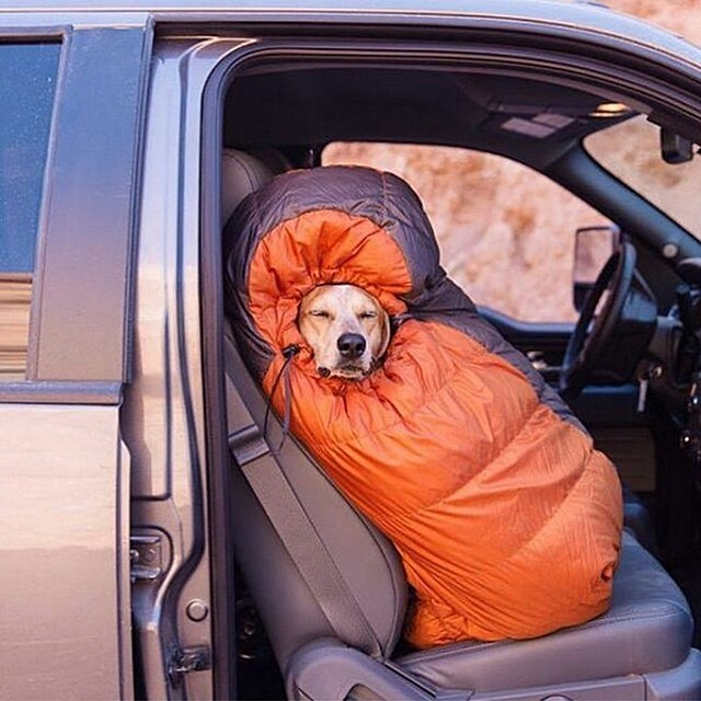 foto-cani-campeggio-trekking-hicking-natura-instagram-camping-with-dogs-54-keb