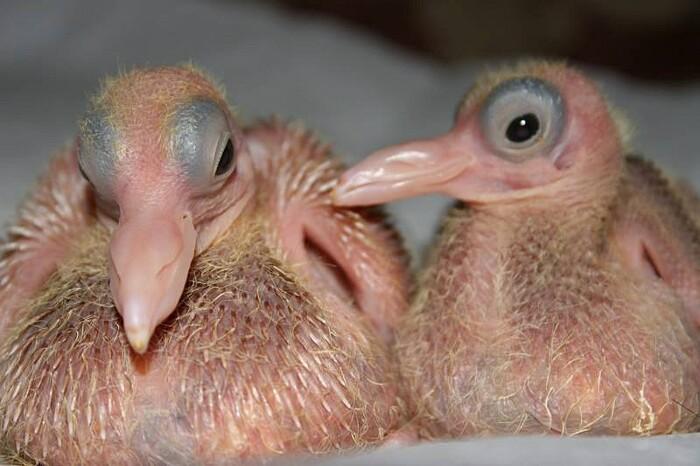 foto-cuccioli-animali-neonati-12