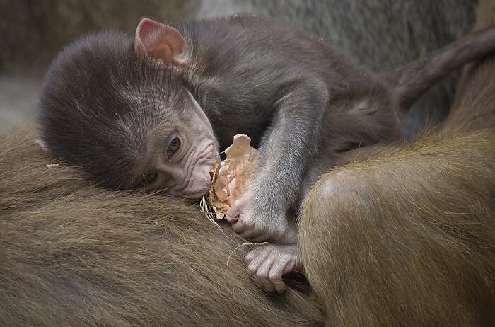 foto-cuccioli-animali-neonati-17