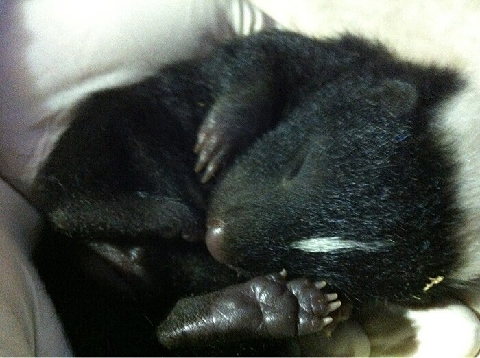 foto-cuccioli-animali-neonati-18