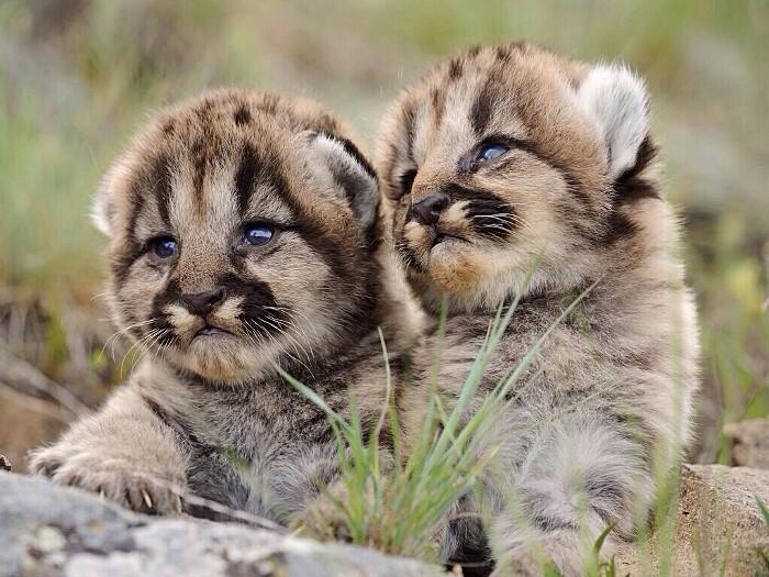 foto-cuccioli-animali-neonati-312