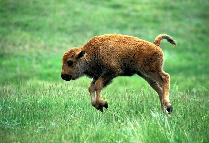 foto-cuccioli-animali-neonati-316