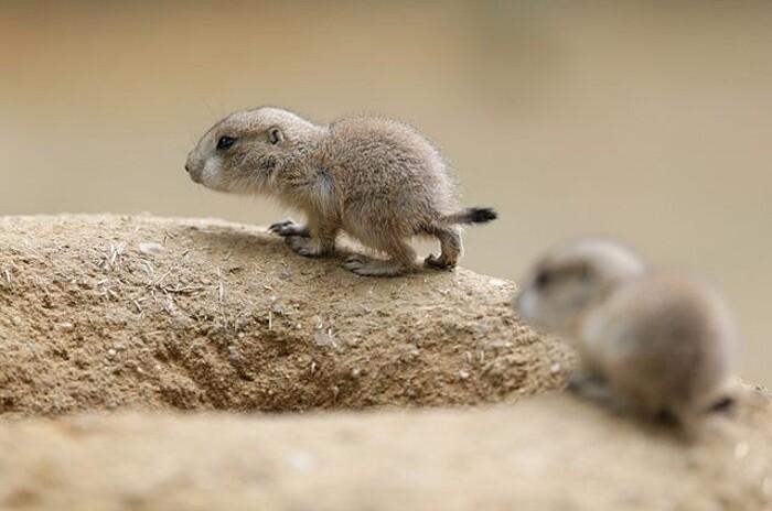 foto-cuccioli-animali-neonati-319