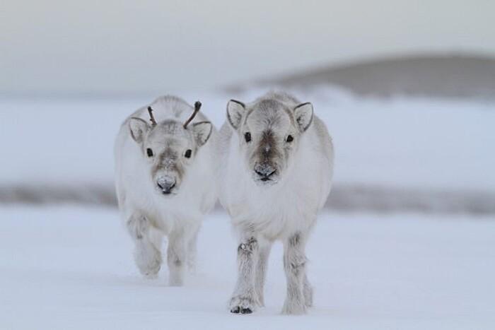 foto-cuccioli-animali-neonati-321