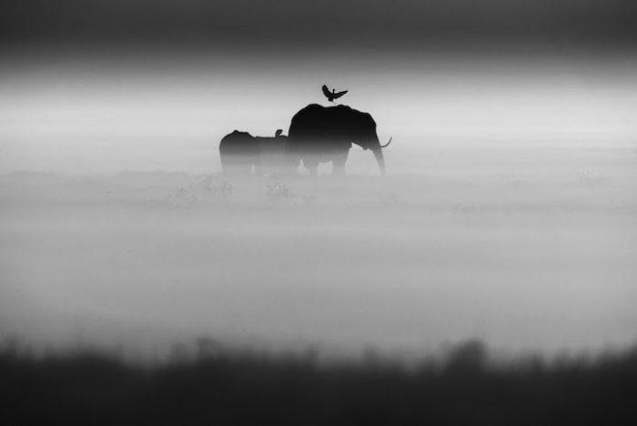 fotografia-bianco-e-nero-animali-selvatici-africa-laurent-baheux-2