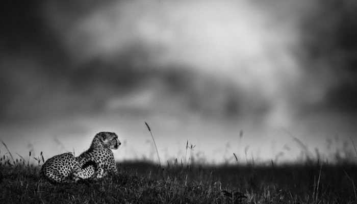 fotografia-bianco-e-nero-animali-selvatici-africa-laurent-baheux-7