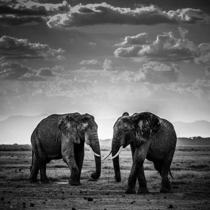 fotografia-bianco-e-nero-animali-selvatici-africa-laurent-baheux-8