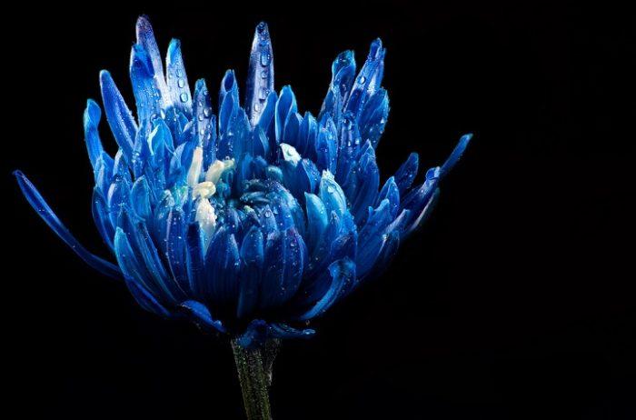 fotografia-blu-nero-esempi-flickr-07