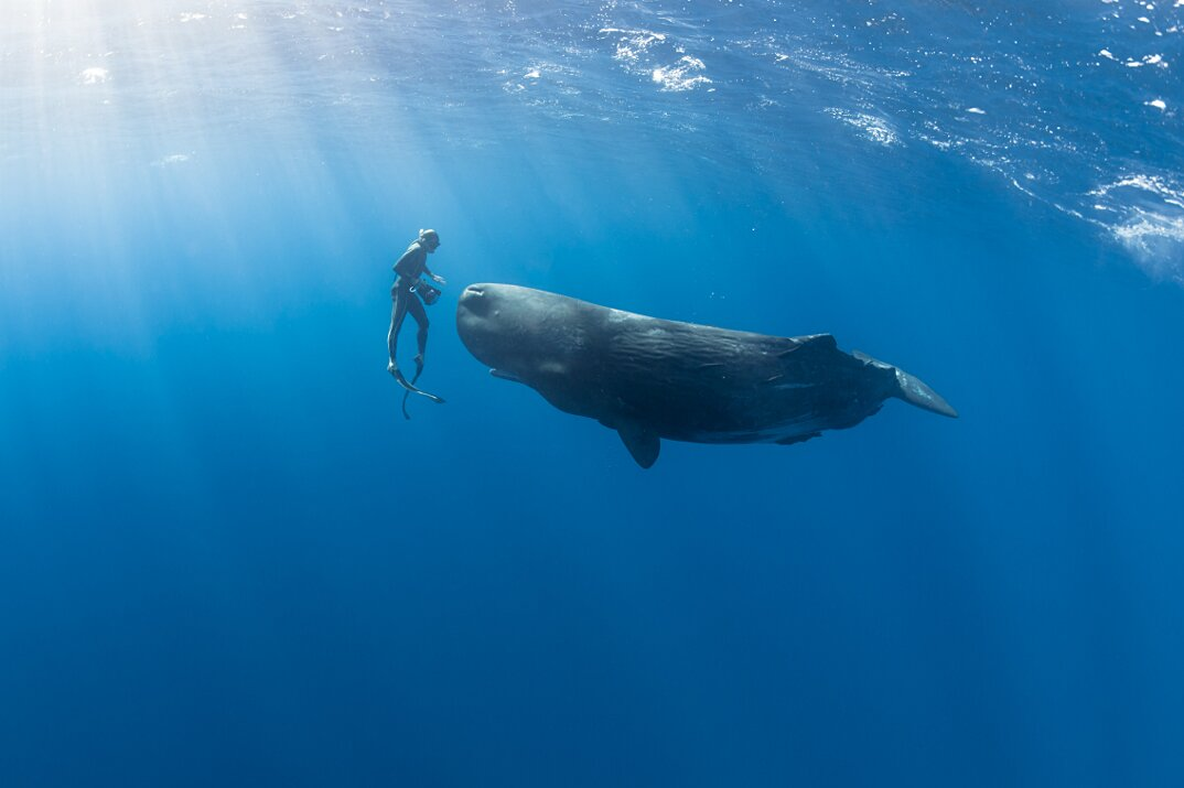 fotografia-subacquea-vita-sottomarina-alex-voyer-roubaud-01