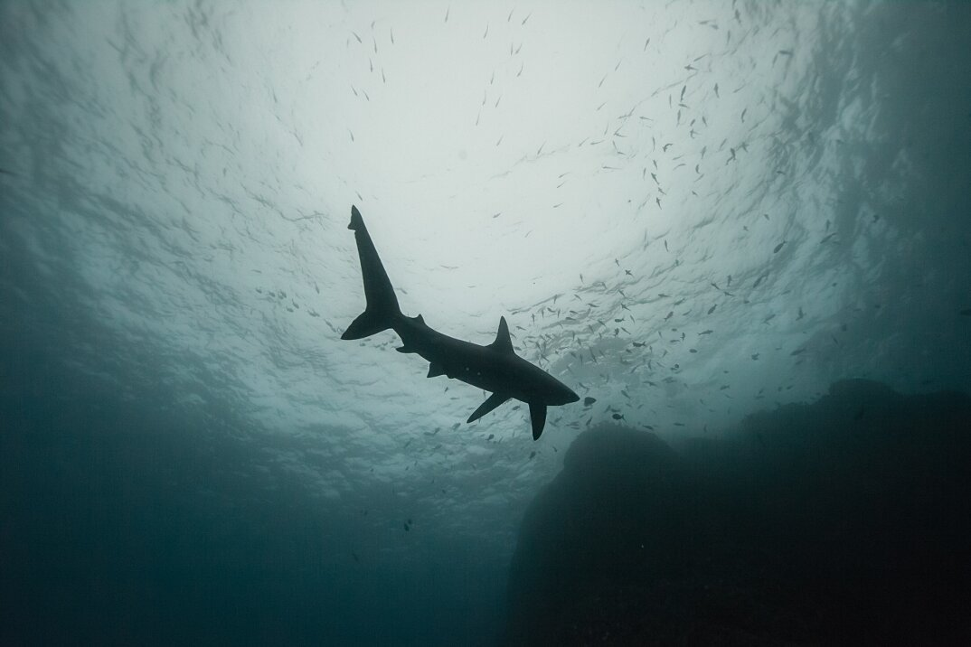 fotografia-subacquea-vita-sottomarina-alex-voyer-roubaud-03