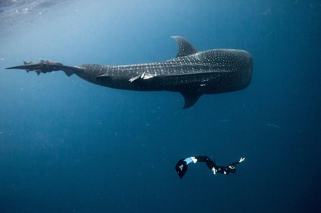 fotografia-subacquea-vita-sottomarina-alex-voyer-roubaud-07