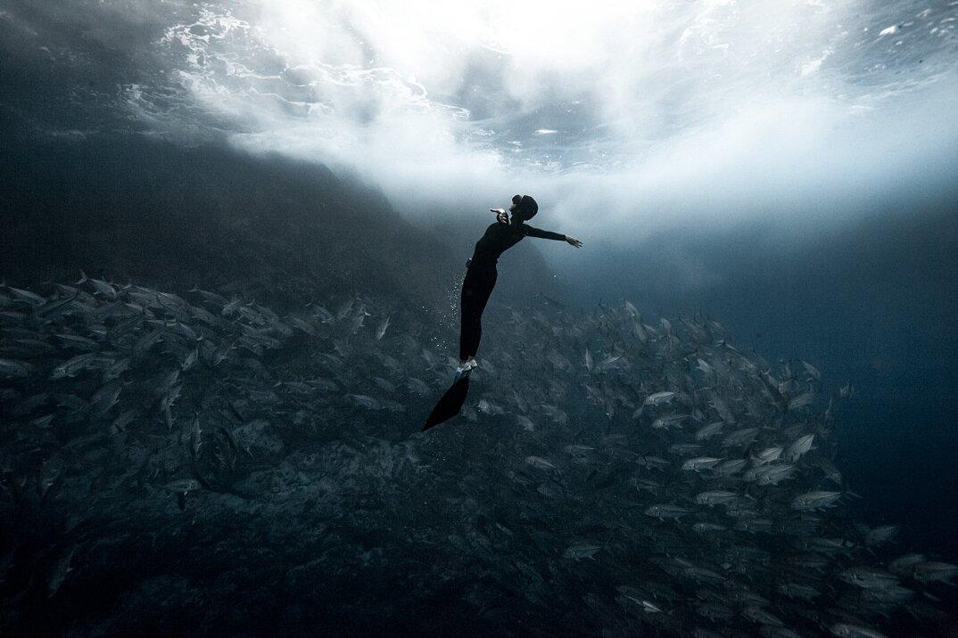 fotografia-subacquea-vita-sottomarina-alex-voyer-roubaud-08