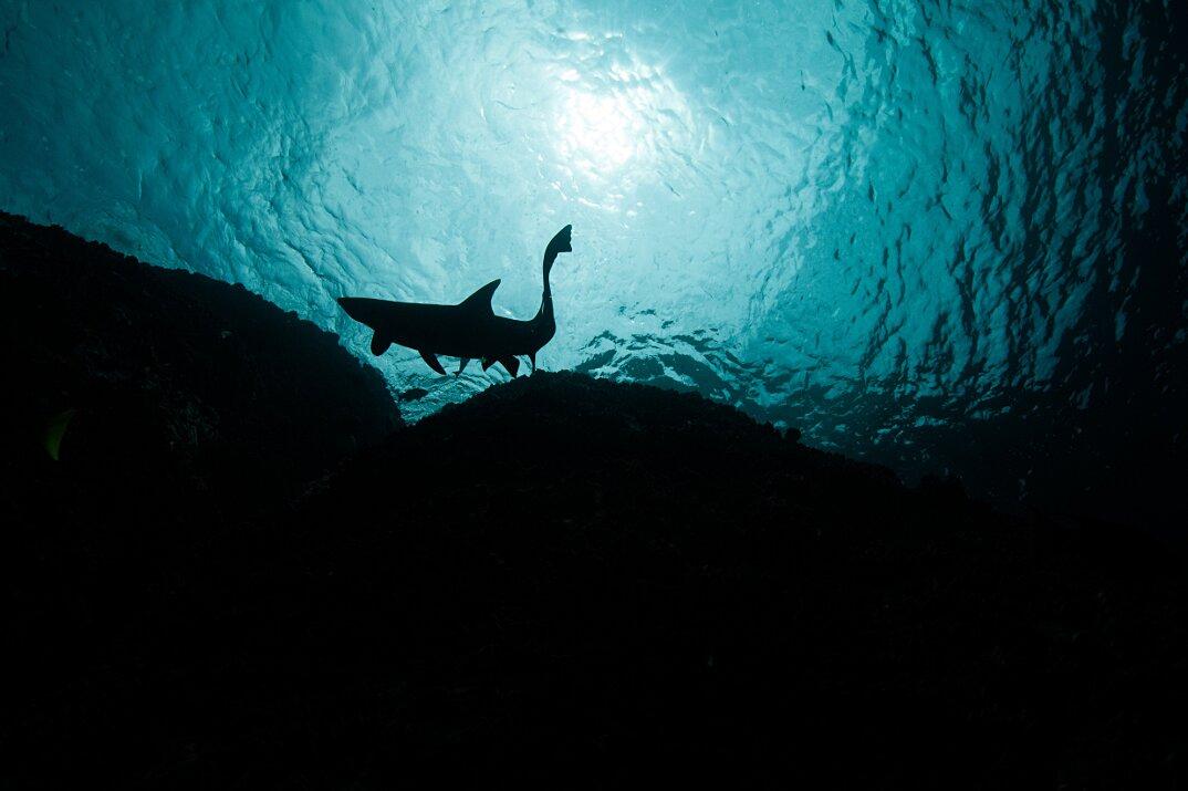 fotografia-subacquea-vita-sottomarina-alex-voyer-roubaud-09