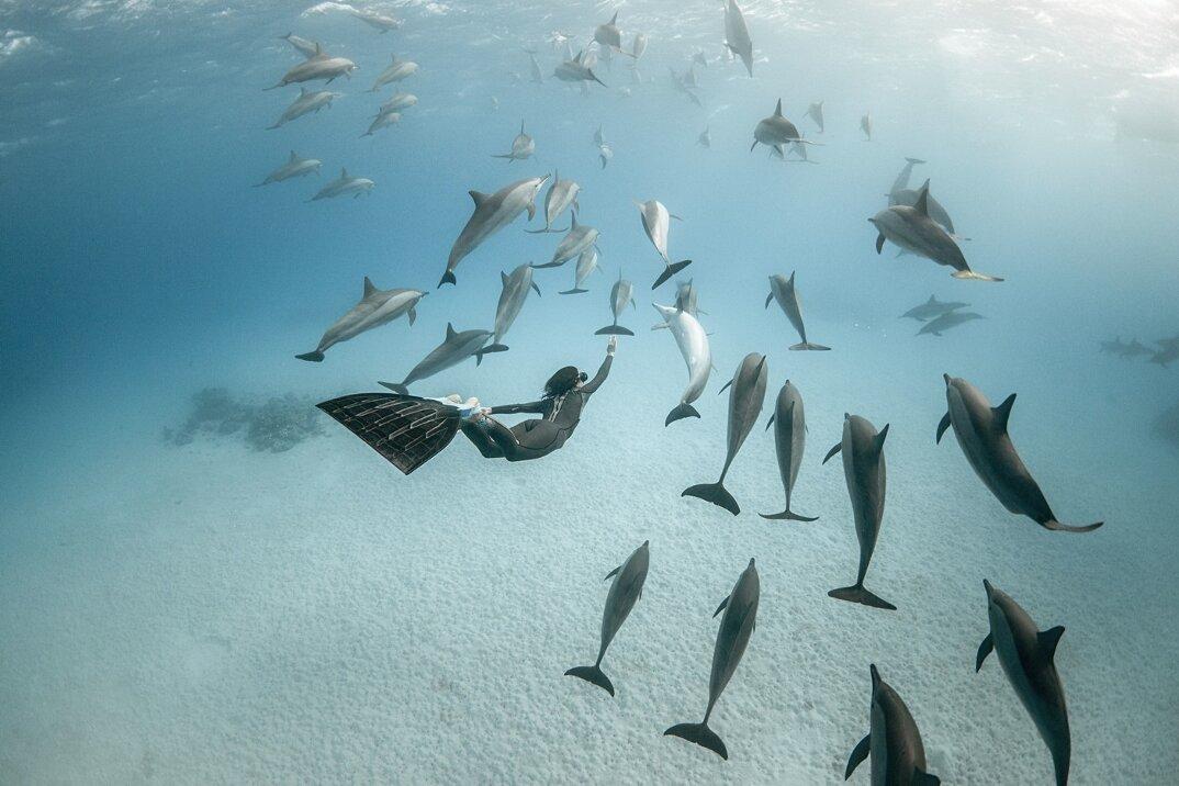 fotografia-subacquea-vita-sottomarina-alex-voyer-roubaud-10