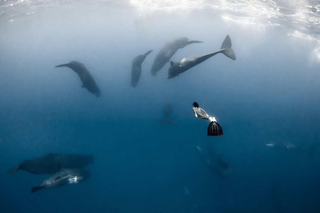 fotografia-subacquea-vita-sottomarina-alex-voyer-roubaud-11