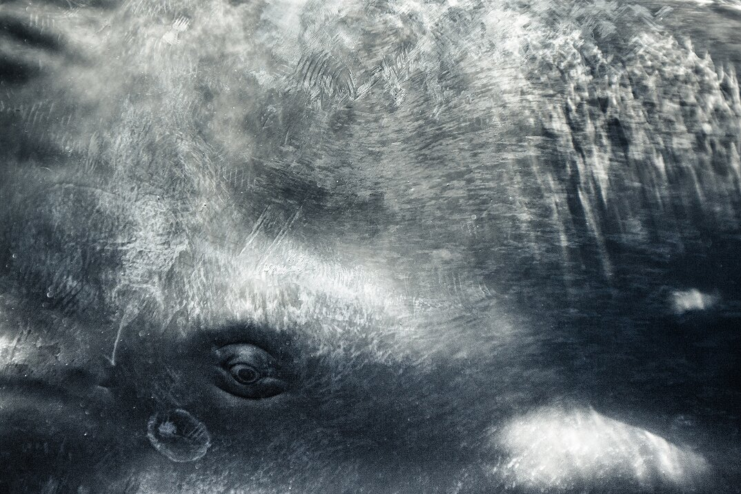 fotografia-subacquea-vita-sottomarina-alex-voyer-roubaud-12