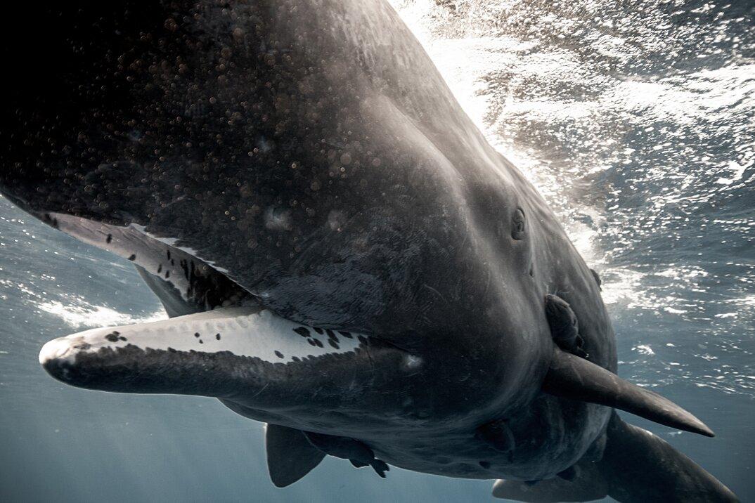 fotografia-subacquea-vita-sottomarina-alex-voyer-roubaud-13
