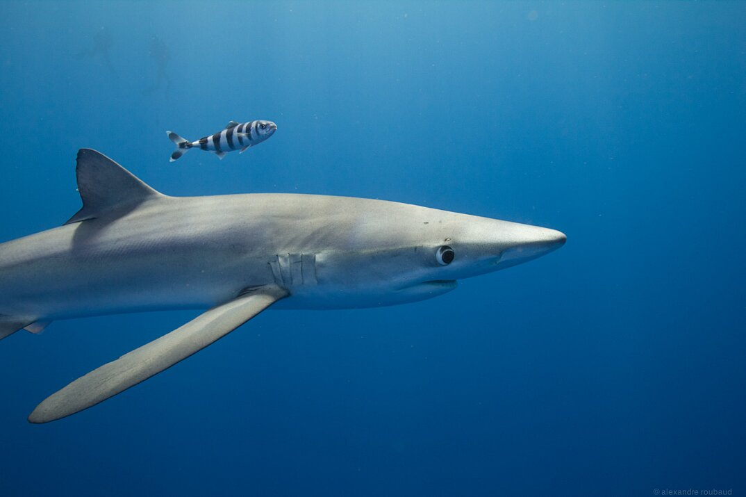 fotografia-subacquea-vita-sottomarina-alex-voyer-roubaud-17