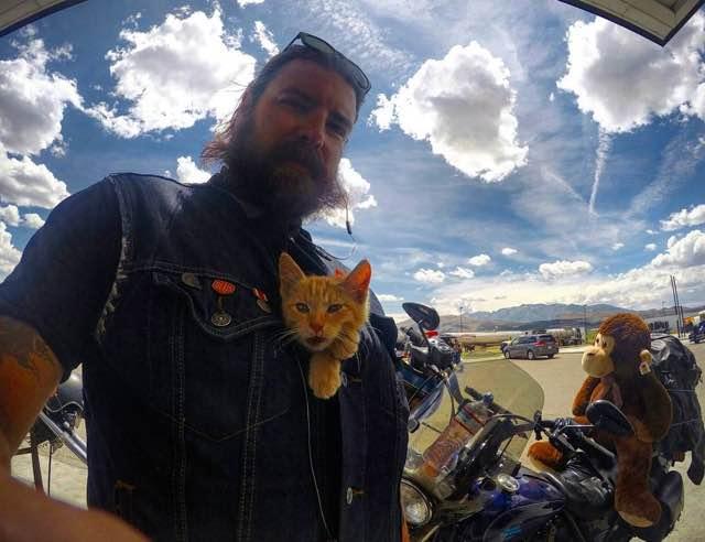 gatto-motociclista-salva-gattino-pat-doody-08