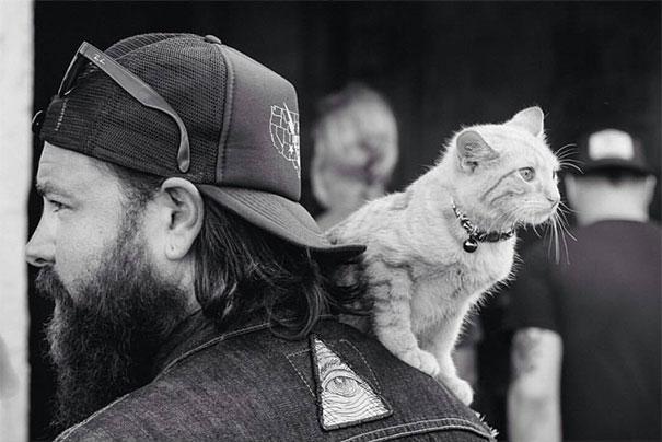 gatto-motociclista-salva-gattino-pat-doody-11