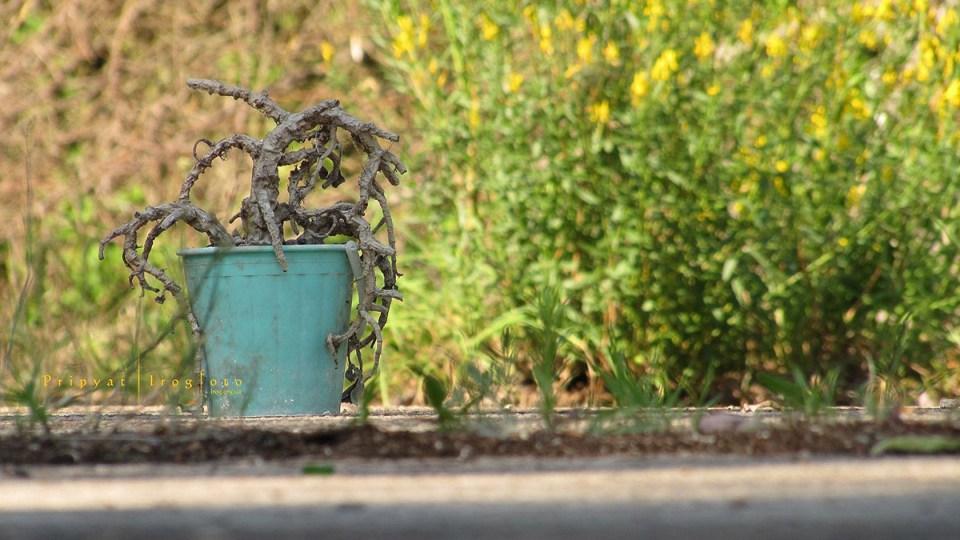 pripyat-chernobyl-natura-vegetazione-animali-radiazioni-01