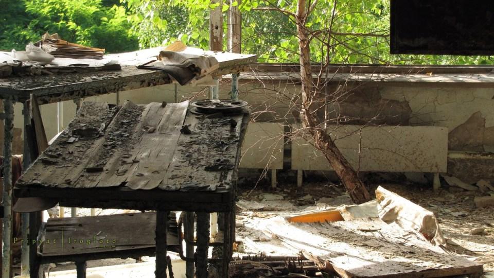 pripyat-chernobyl-natura-vegetazione-animali-radiazioni-03