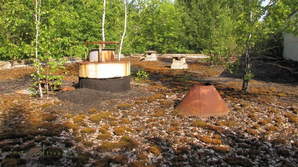 pripyat-chernobyl-natura-vegetazione-animali-radiazioni-04
