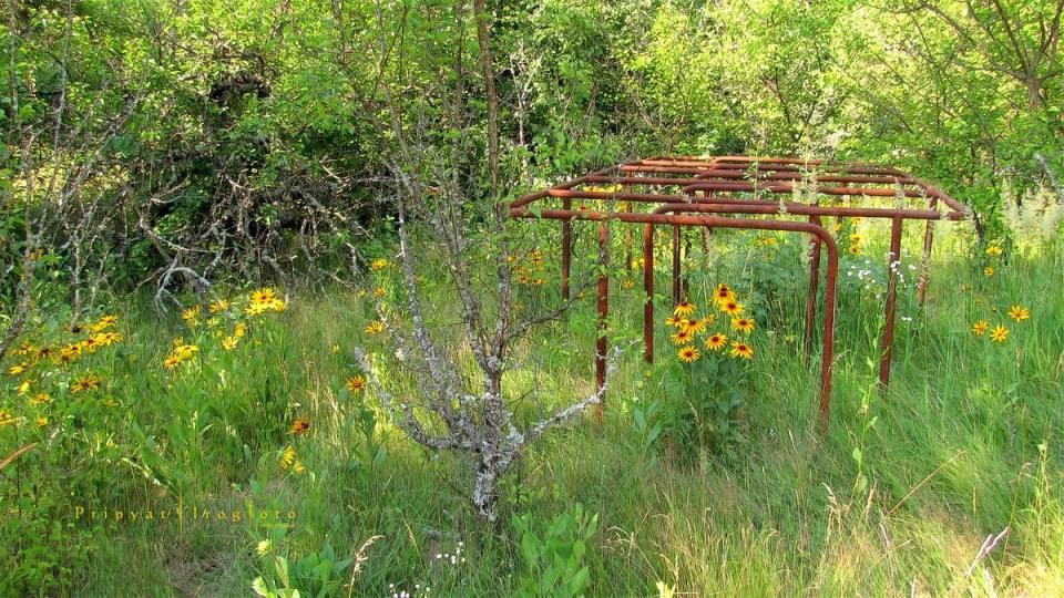 pripyat-chernobyl-natura-vegetazione-animali-radiazioni-09