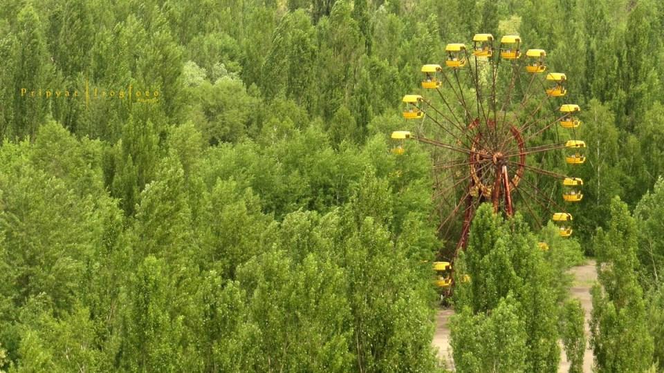 pripyat-chernobyl-natura-vegetazione-animali-radiazioni-10
