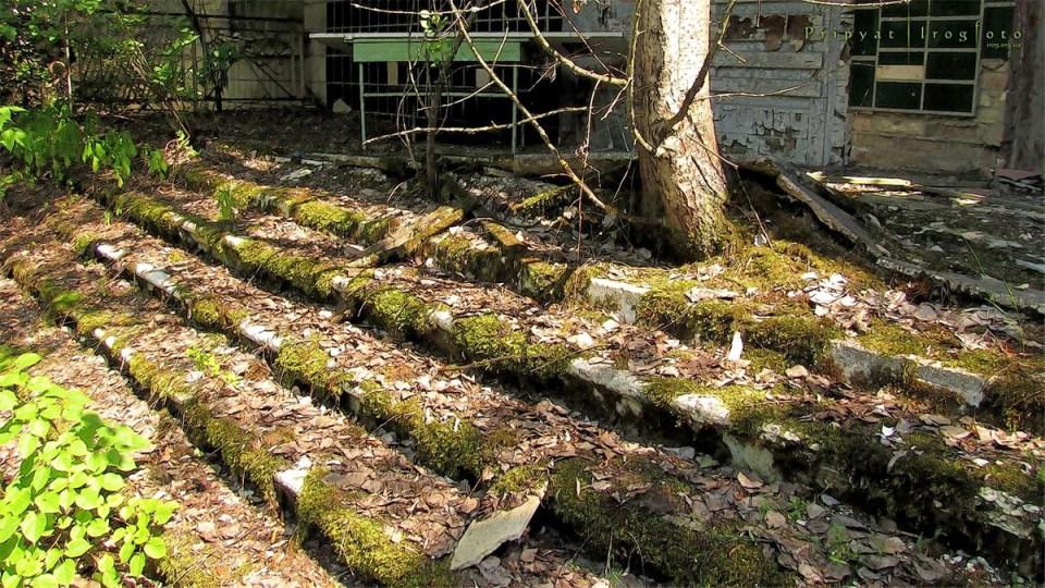 pripyat-chernobyl-natura-vegetazione-animali-radiazioni-12